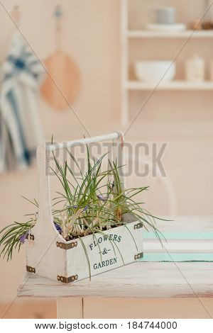 On a background of towels there is a green plant in a pot on a chair