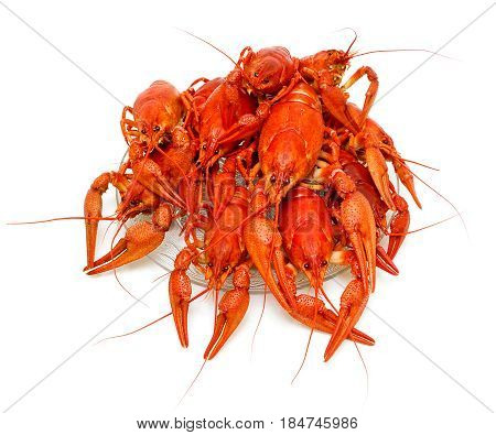 Boiled crayfish close-up on a white background. Horizontal photo.