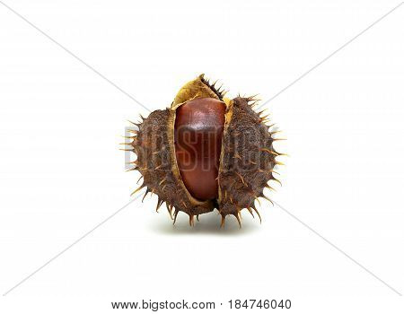 Chestnut on a white background close up. Horizontal photo.