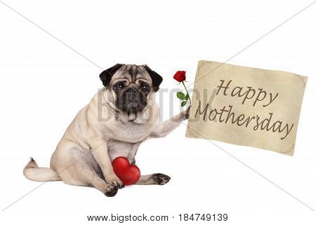 lovely cute pug puppy dog sitting down holding vintage paper sign with text happy mothersday isolated on white background
