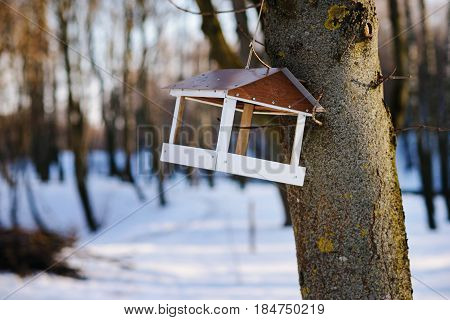 Bird Feeders. Tree House For The Birds, Cheerful Apartment