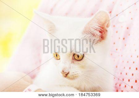 Poor stray white kitten with big yellow eyes