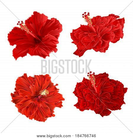 Red hibiscus corrugated tropical plant vintage hand draw set two vintage vector illustration