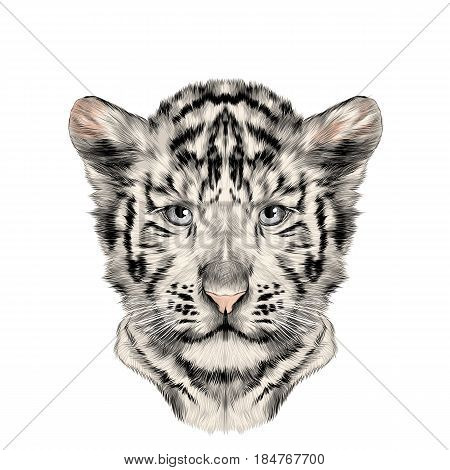 head cub the white tiger is symmetric sketch vector graphics color picture