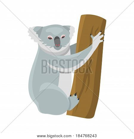 Grey koala bear isolated on wood branch australian marsupial animal that eat only eucalyptus sitting on tropical tree trunk. Vector illustration of herbivorous koala