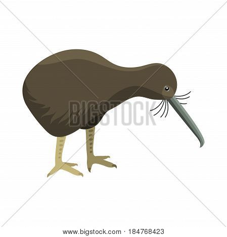 Bird vector vertebrate apteryx mantelli gray wildlife nature kiwi cartoon wing flying animal cute drawing silhouette. Wild fly color bird character illustration.