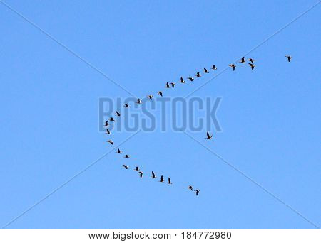 sky flight  blue geese atmosphere shoal time cloud flying weather outdoor  high sunny clouds spring view nature white fly airplane summer day heaven clear  cloudscape cloudy air