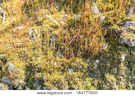 Spring Fores Moss In The Sunshine