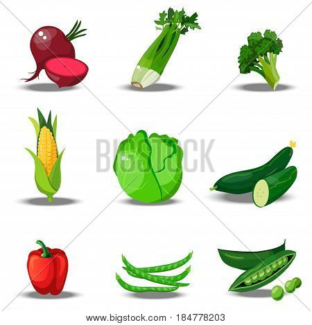 Very high quality original trendy vector set with fresh healty vegetables. Summer agriculture design. paprika, celery, broccoli, corn, cabbage, cucumber, beet, beans peas pepper