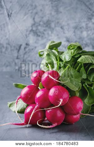 Fresh organic ripe young radish bundle with leaves over gray blue texture background. Close up