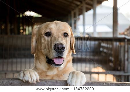 Brown dog stood and wait over the cage background