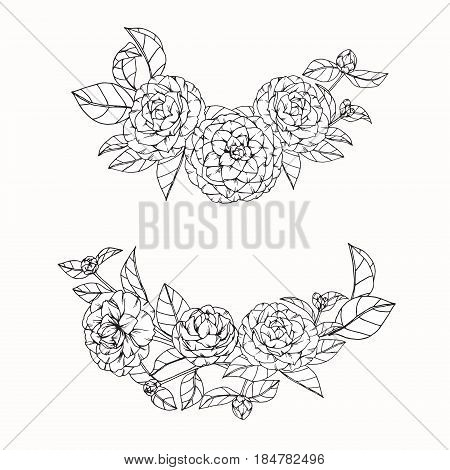 Camellia Flowers Drawing And Sketch With Line-art On White Backgrounds.
