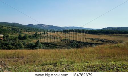 In the highlands of the Mpumalanga province in South Africa, mountainous landscape with endless forests, cloudless sky