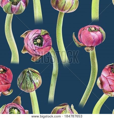 Seamless floral pattern with purple buttercup buds. Spring flowers. Botanical natural background drawn by hand with colored pencil