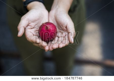 Adult Man Hand Holding Fresh Beetroot