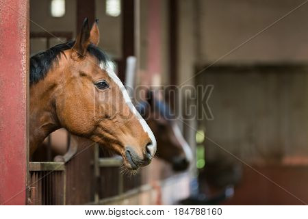 The horse is looking over the stable doors