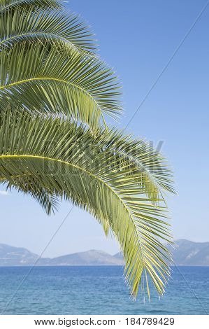 Palm tree branches over a blue sky