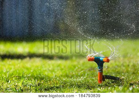 Garden sprinkler watering grass at sunset and droplets of water