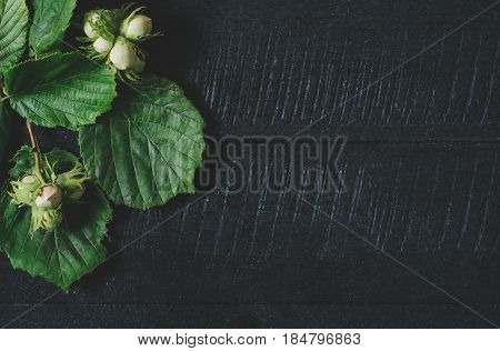 Sprigs with hazelnuts and green leaves on a black wooden background top view fresh vegan food on space backdrop mock up green leaf seasoning plant on kitchen table vitamins from country forest