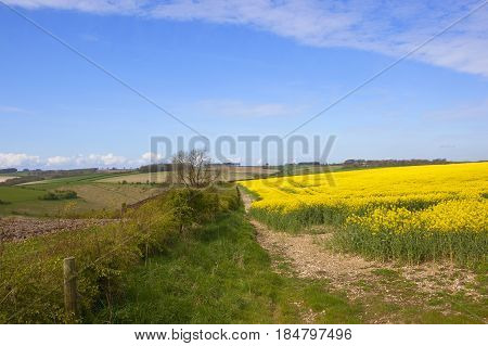 Oilseed Rape And Countryside