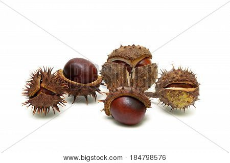 Fruits of chestnut isolated on white background close-up. Horizontal photo.
