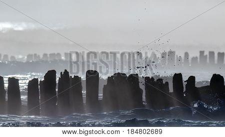 SEA COAST - Hazy morning at the seaside