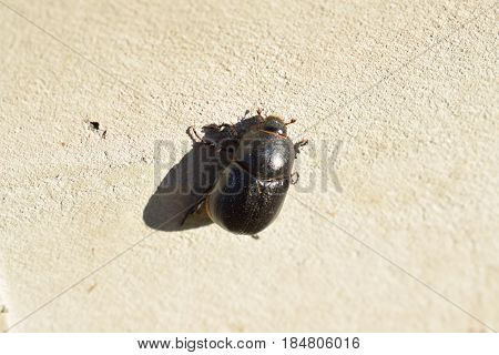 A small bug perseveres when it climbs to the wall