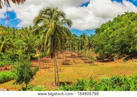 Colombia, wild Darien jungle of the Caribbean sea near Capurgana resort and Panama border. Central America. Waterfall into the jungle