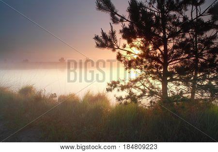 beautiful misty sunrise on wild lake with trees