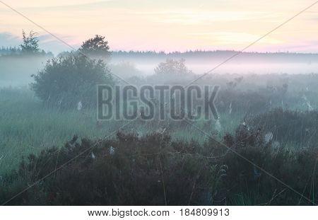 calm misty morning on marsh in summer