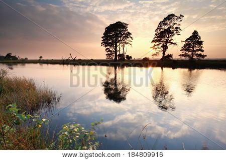 gold summer sunset over wild lake, Netherlands