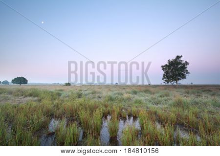 moon over marsh at dawn in summer