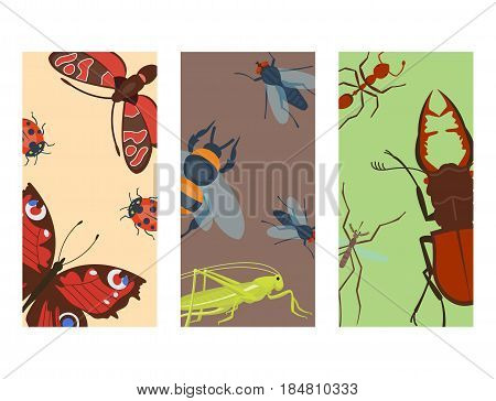 Colorful insects cards wildlife wing detail summer bugs wild vector illustration. Nature pest small animal art sign element stag detail graphic.