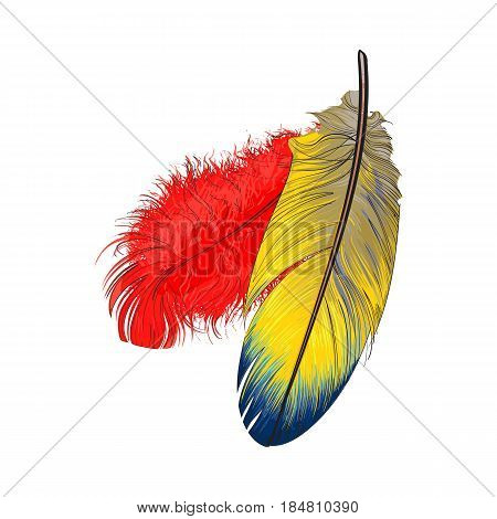 Two hand drawn smoth orange and yellow tropical, exotic bird, parrot feathers, sketch style vector illustration on white background. Realistic hand drawing of yellow and orange parrot, bird feathers