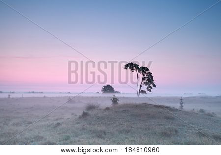 calm misty sunrise over meadow with pine tree