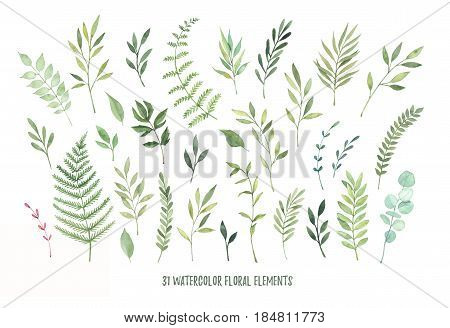 Hand Drawn Watercolor Illustrations. Botanical Clipart ( Laurels, Frames, Leaves, Flowers, Swirls, H