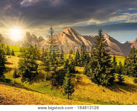 Composite summer landscape with spruce forest on grassy hillside in High Tatra Mountains in evening light
