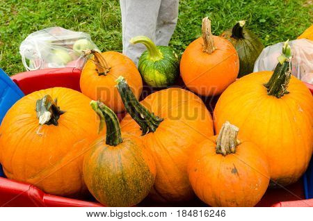 freshly picked pumpkins piled on red wagon