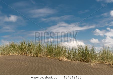Auckland New Zealand - March 2 2017: Dark sand dune with horizontal line of beachgrass marram under blue sky with white clouds at Karakare Beach.