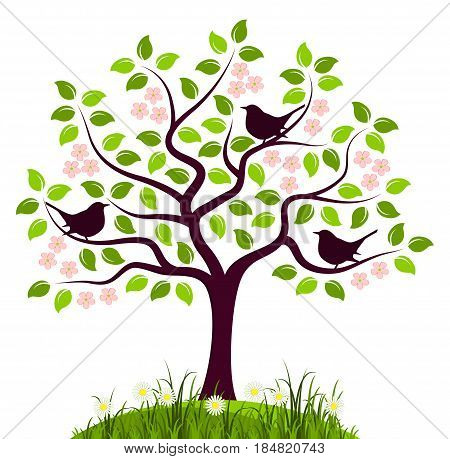 vector flowering tree with birds isolated on white background