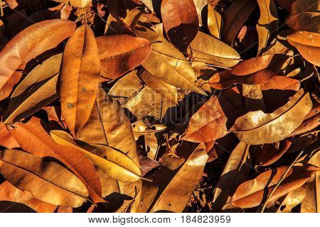 Withered Tropical Leaves Background.