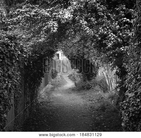 Black and white passageway under the trees to home
