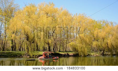 Leisure in city park - single boat riding along the pond in spring. Weeping willows on the riverside.
