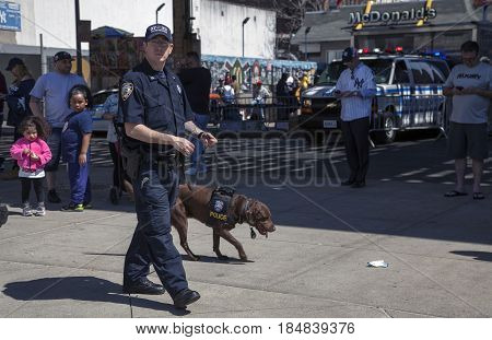 BRONX NEW YORK USA - APRIL 10: NYPD Counter-terrorism Bureau K-9 officer and dog during opening day at Yankee Stadium. Taken April 10 2017 in New York.