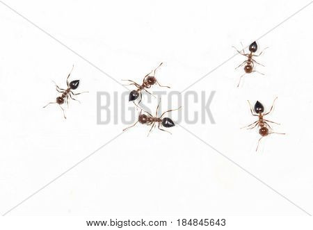 ants on a white wall. close . A photo