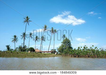 Idyllic Landscape With Coconut Trees - Parnaiba River (portuguese: Rio Parnaiba), Brazil's Northeast