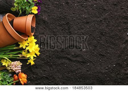 Composition with plants and pots on soil background