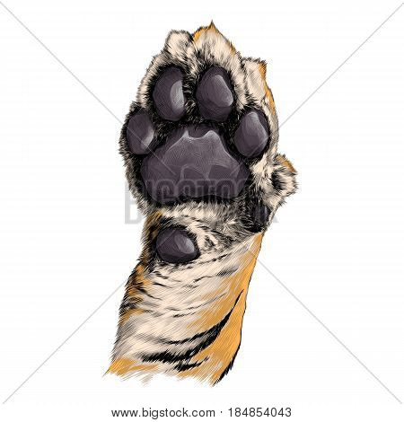 tiger paw pads sketch vector graphics color picture