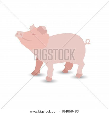 Pig Is Pink. Illustration For Your Design. Pink Pig