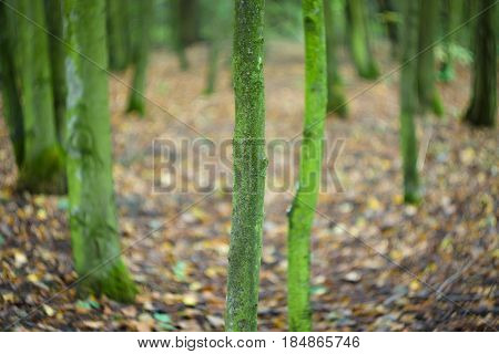 Autumn forest. Trunks of trees. Abstract background. Focus on the foreground. Swirling bokeh.